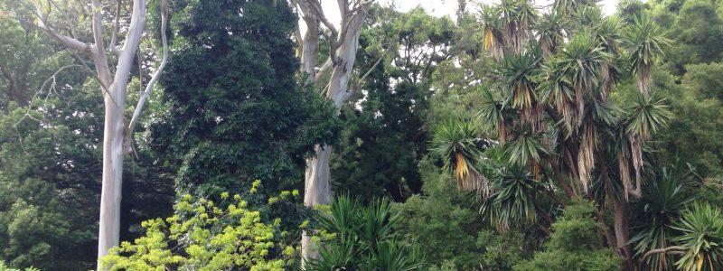 São Miguel vai receber especialistas internacionais para debater importância do turismo para os jardins no mundo