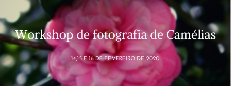 photography workshop of Camellias